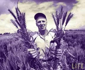 Norman Borlaug Semi Dwarf Wheat Gluten AutoImmune Disease