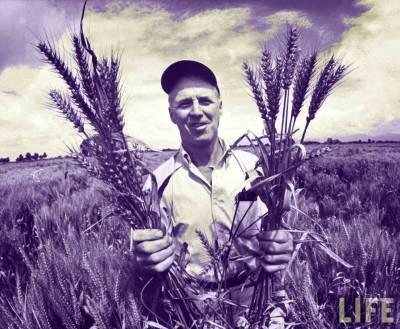 Wheat Gluten Leaky Gut and Autoimmune Disease