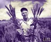 Wheat Gluten, Leaky Gut, and Autoimmune Disease Part Four