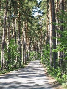 Road_to_Kallahti_nature_conservation_area_in_Helsinki_(Kallvik)