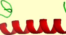 Calcitoninjeffreydachthyroidosteoporosissynthroidf