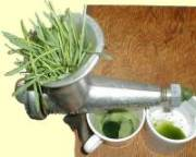 Wheatgrass Juice by Jeffrey Dach MD