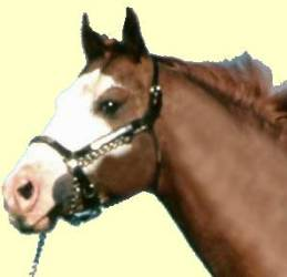 Pregnant Horse Urine Premarin