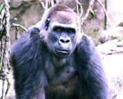 Anthropologist Discovers Religious Behavior in Primates