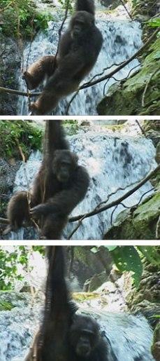 waterfall_Jane_Goodall_Chimpanzee_Gombe