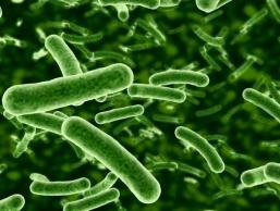 Gt bacteria dysbiosis autism clostridia