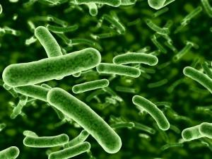 Gut bacteria dysbiosis clostridia