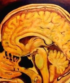 Pituitary hypothalamus