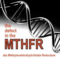 MTHFR_jeffrey_dach_md