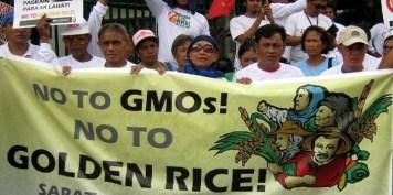 GMO_Golden_Rice_Phillipines_Say_No