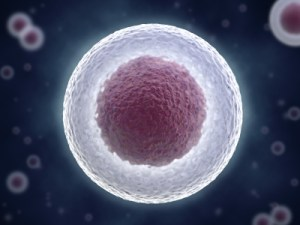 stem_cell_microbiome_transplant