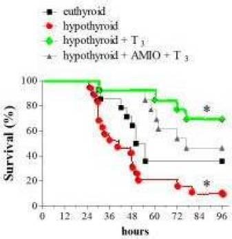 hypothyroid-mouse-thyroxine-endotoxemia10a_a99