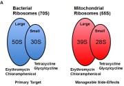 Clarithromycin Anti-Cancer Antibiotic