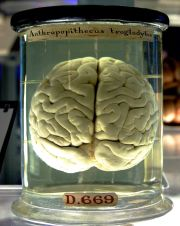 Is Your Drug From the Medical Museum?