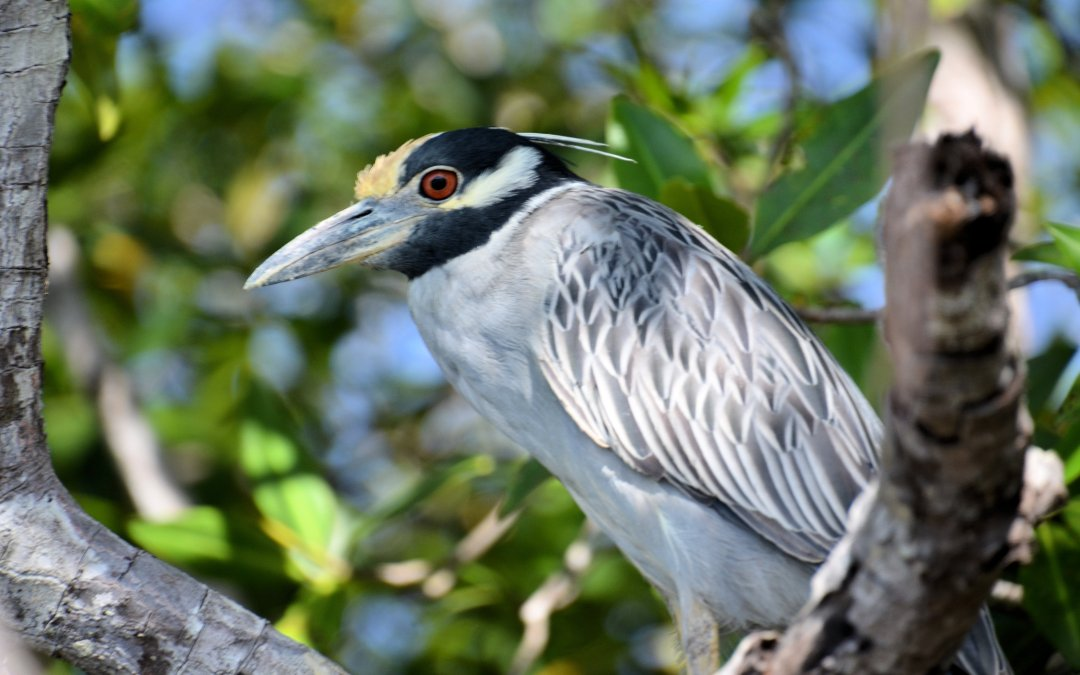 Tamarindo Mangrove & Estuary Boat Tour, Costa Rica (February 2017)