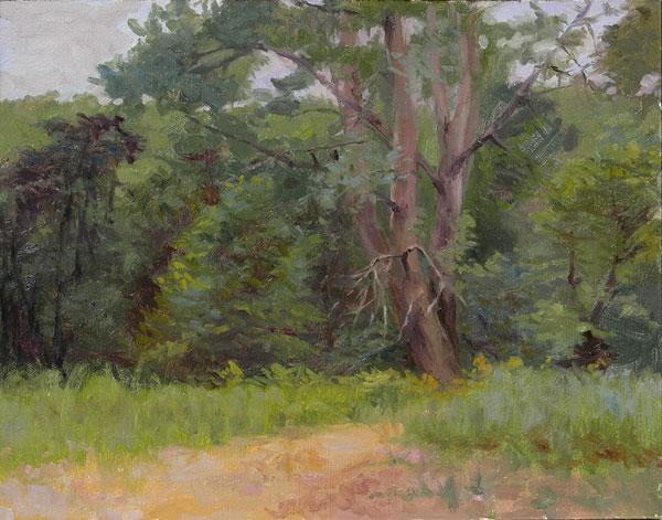 Poplars on the Mississippi River Sandbar