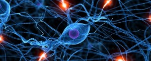 brain health neurons