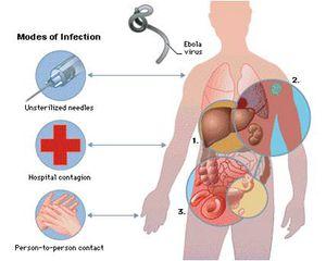 ebola transmission