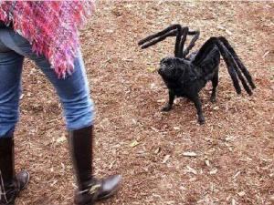 spider_dog