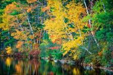 Golden Fall. Chocorua Lake, NH