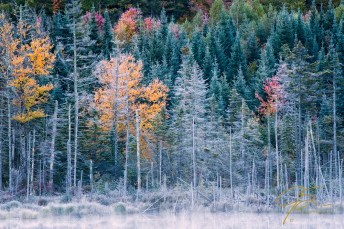 Autumn Frost