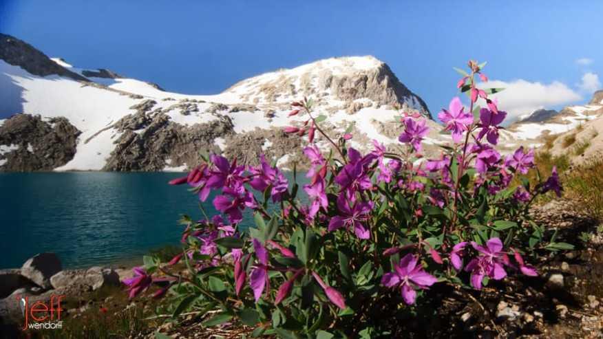 Alpine wildflowers photographed by Jeff Wendorff