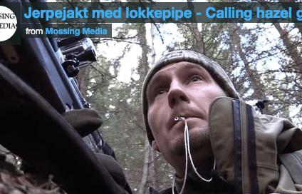 Jerpejakt med lokkepipe-Mossing Media