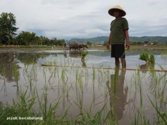 petani di Desa Wisata Kebonagung