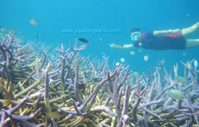 snorkeling pulau sepa 5-1