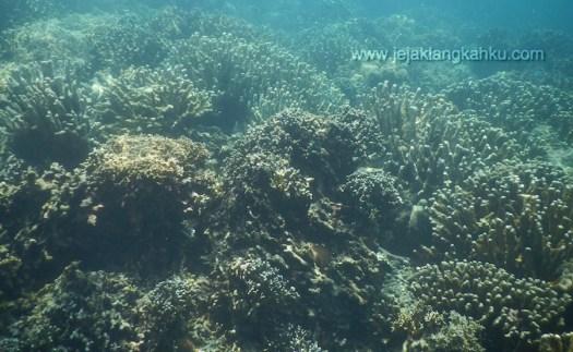 snorkeling pulau pahawang lampung 6