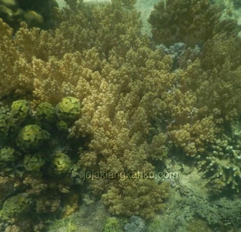 gili nanggu lombok 9