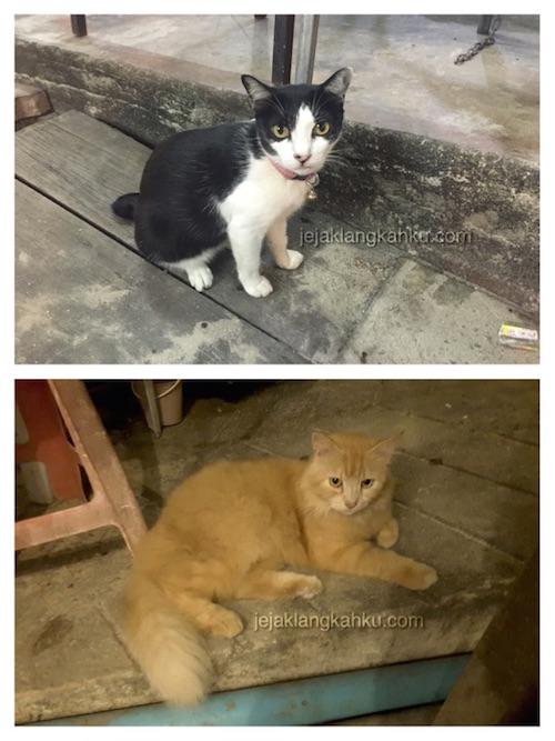 kucing phi phi island 2