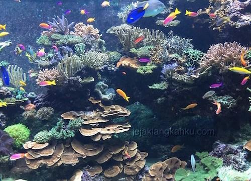 Rela Ngantri Demi Si Cantik Bintang Laut di SEA Aquarium, Sentosa Singapore