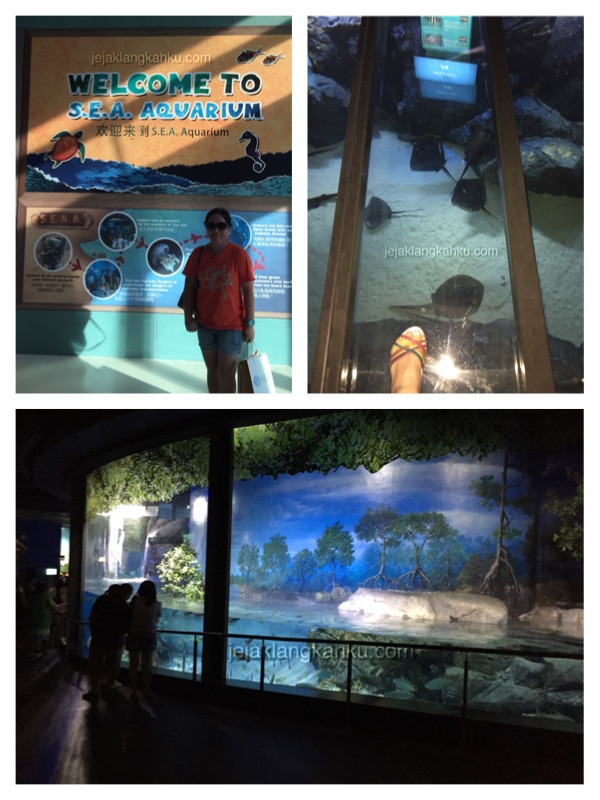 sea aquarium singapore 5