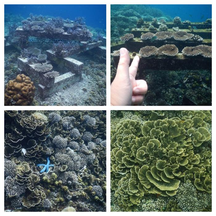 underwater-gili-bidara-lombok-2