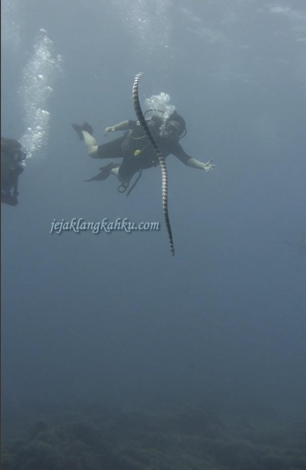 diving-gili-meno-lombok-4