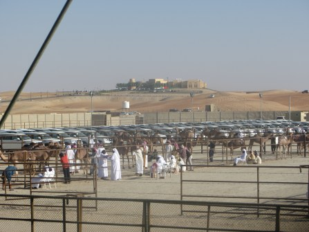 Camel Auction and Beauty Pageant