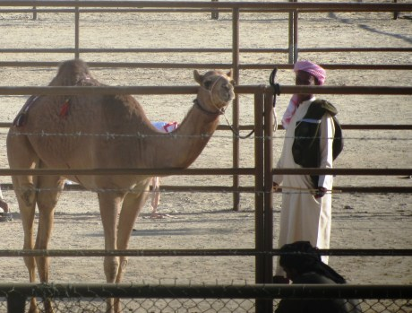 Camel and owner
