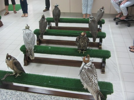 The Falcon Hospital