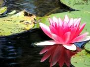 Le bassin aux nymphéas de Claude Monet