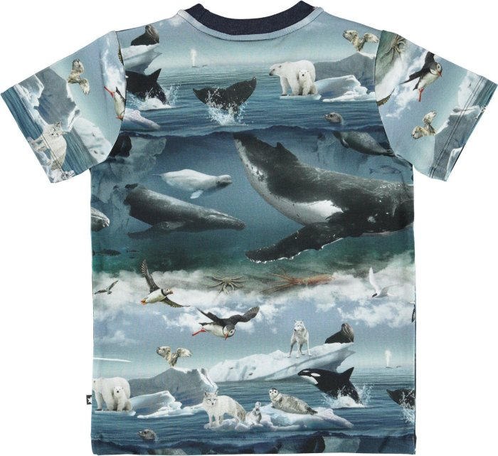 Ralphie T-shirt- Artic Landscape-T-SHIRT-MOLO-98 - 3 yrs-jellyfishkids.com.cy