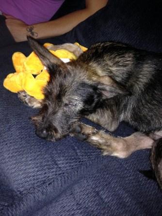 Cuddling with Pluto