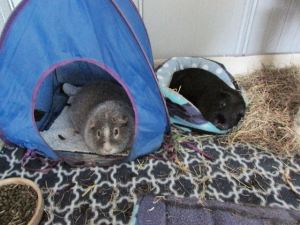 Midge and Percy Pig