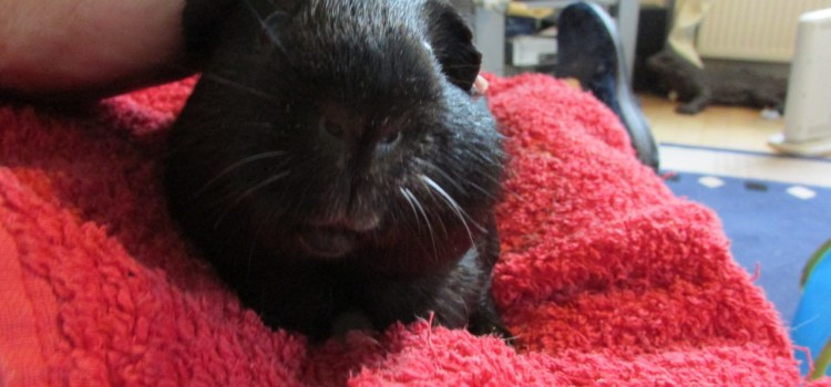 Percy Pig's lump