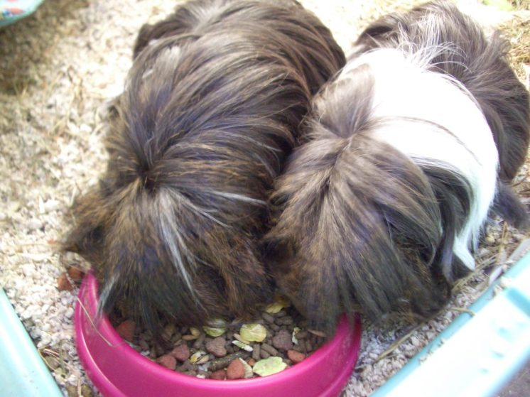 Brothers in feedbowl