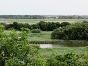 Hickling-Horsey with mill in distance