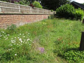 wildflower garden first year