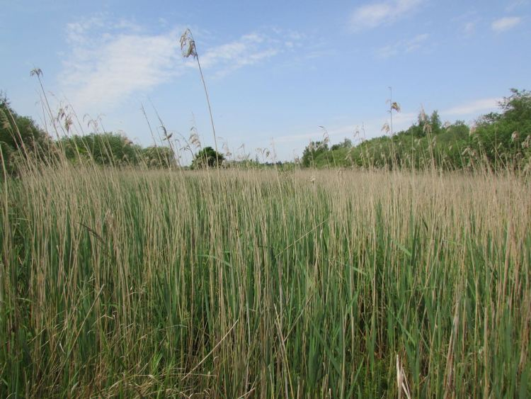 heart of Strumpshaw fen