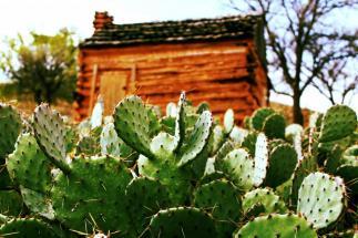 a prickly cabin