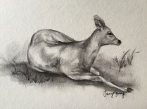 Life sketch of Japanese Nara Deer